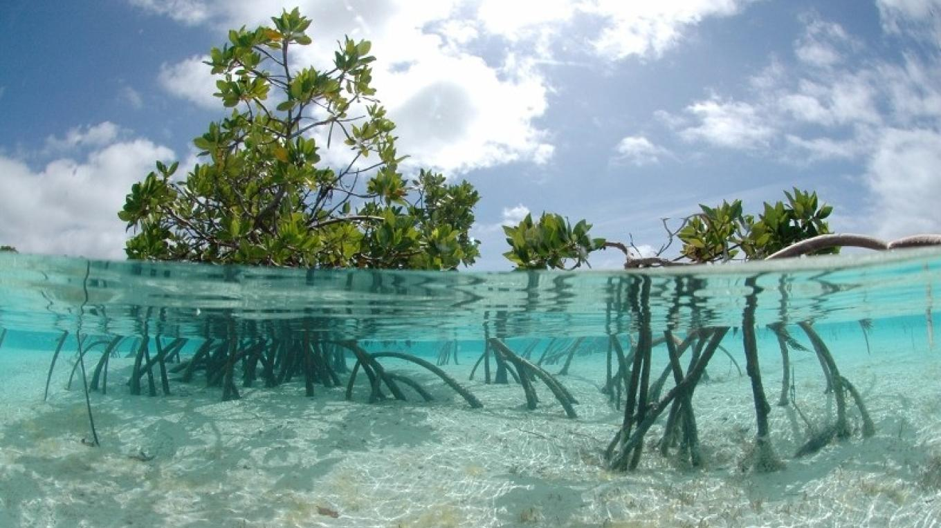 View of mangroves at Conception Island National Park. – Bahamas National Trust