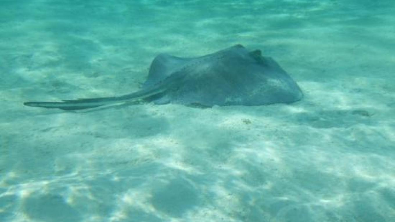 View of a sting ray at Schooner Cay – tripadvisor