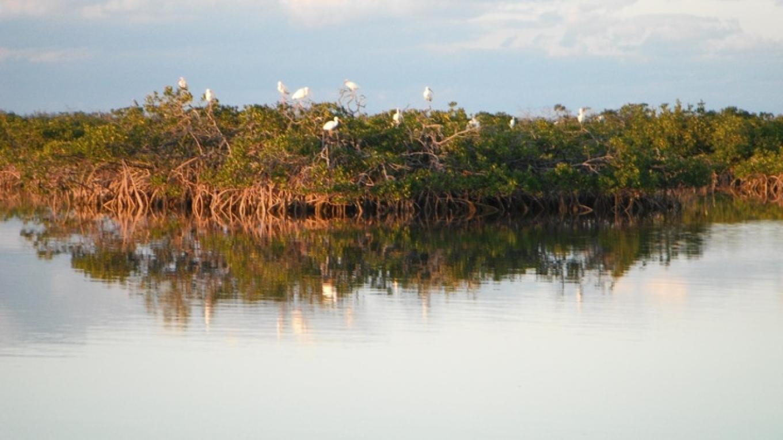 Mangroves in Bimini – Bimini Bonefish Club