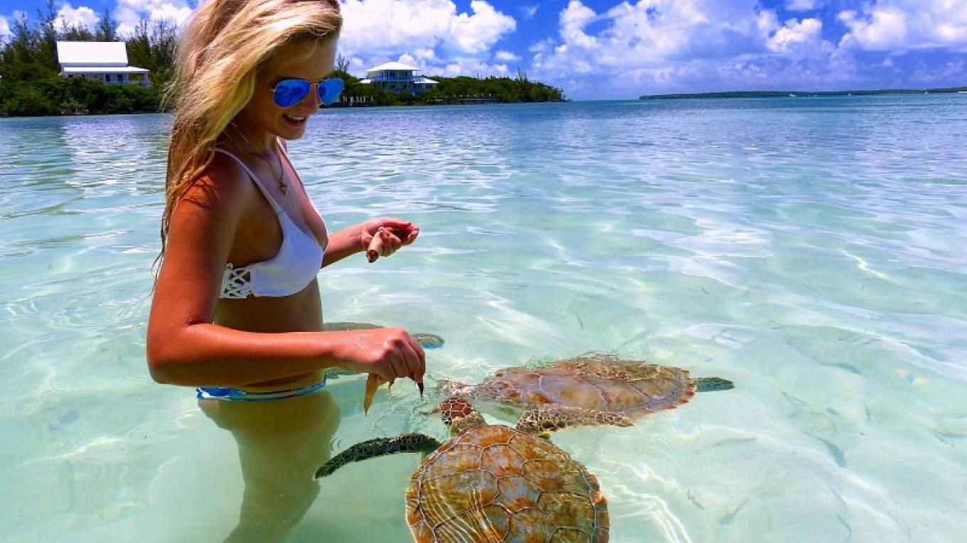 Playing with Sea Turtles in the Water – Bluff House Resort & Marina
