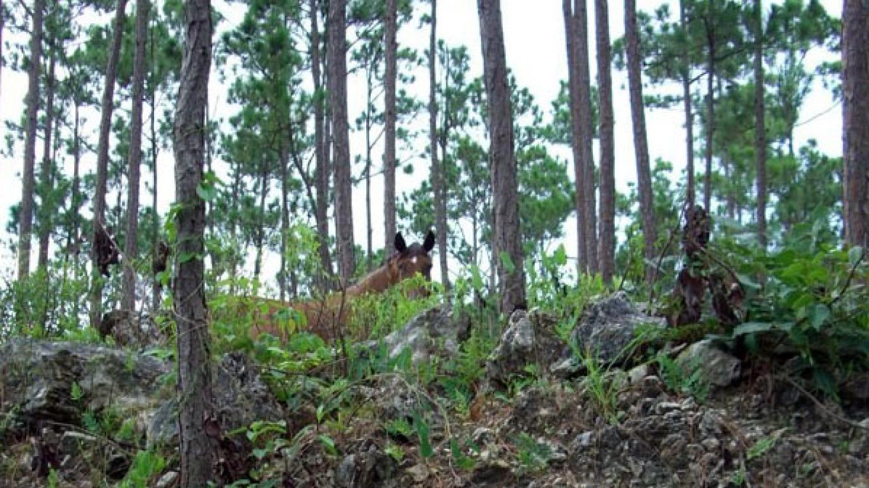 Wild Horses of Abaco Preservation Society (WHOA)