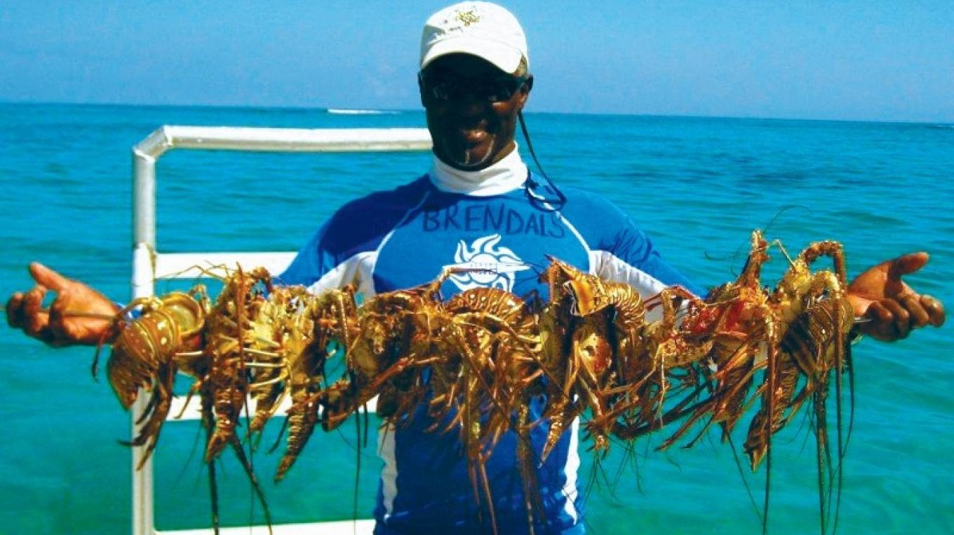 A catch of crawfish. – Brendal's Dive Center