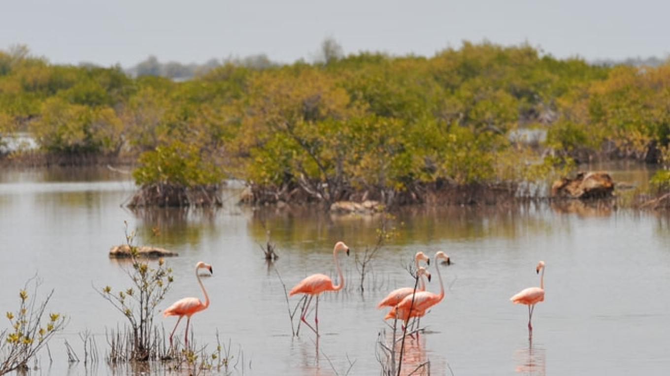 Flamingos in the water on Little Inagua National Park – Bahamas National Trust