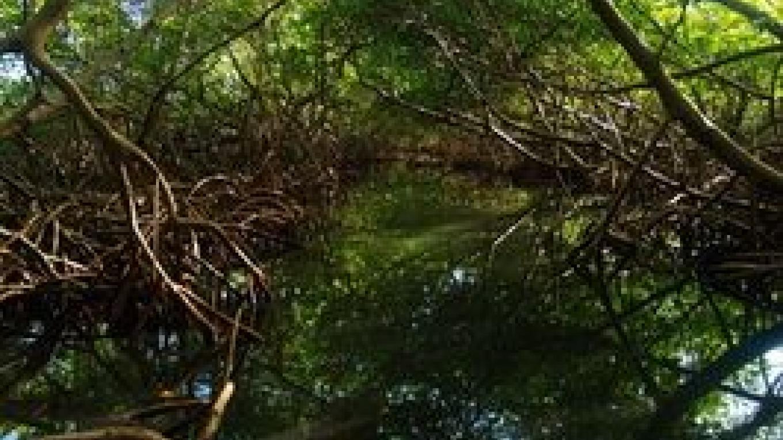 Inside the Mangroves – Bimini Big Game Club Resort and Marina