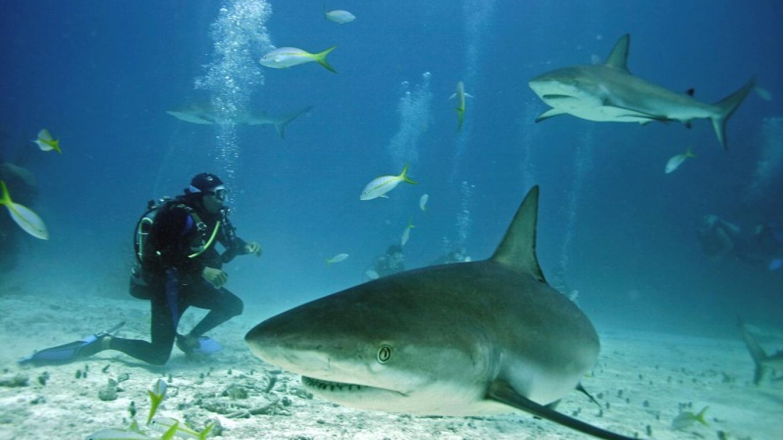 Caribean Reef Sharks – Small Hope Bay Lodge