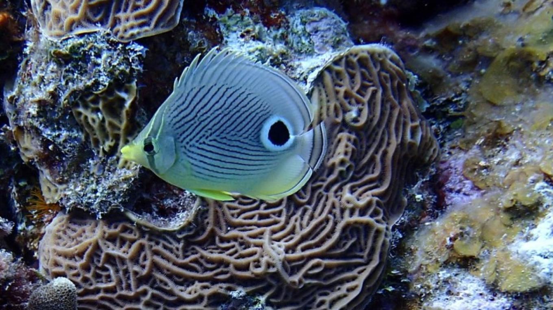Fish – Miller's Dive Shop