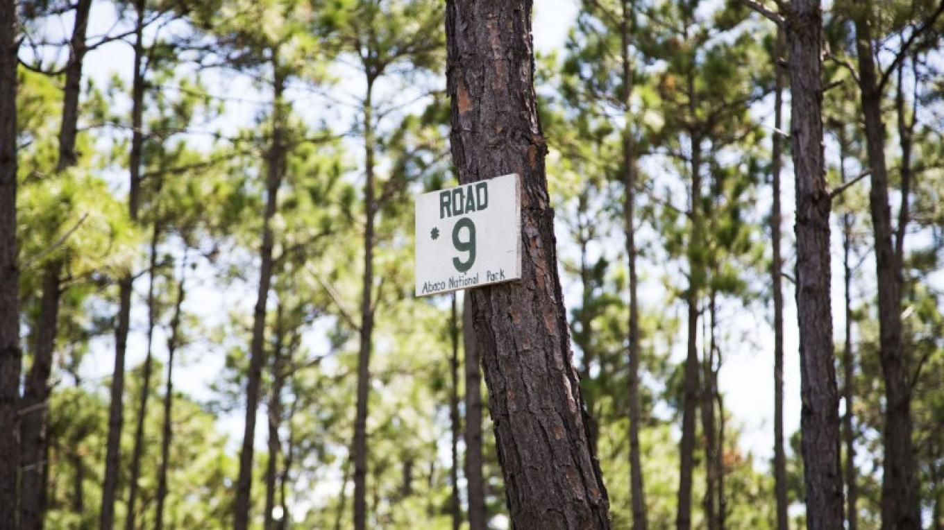 Tree marker in the Abaco National Park – Bahamas Ministry of Tourism