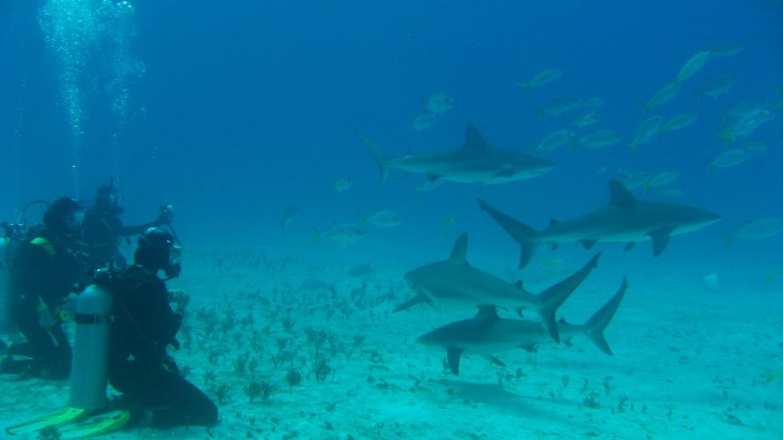 Sharks get an audience – Capt Daryl Miller, Dive Mast