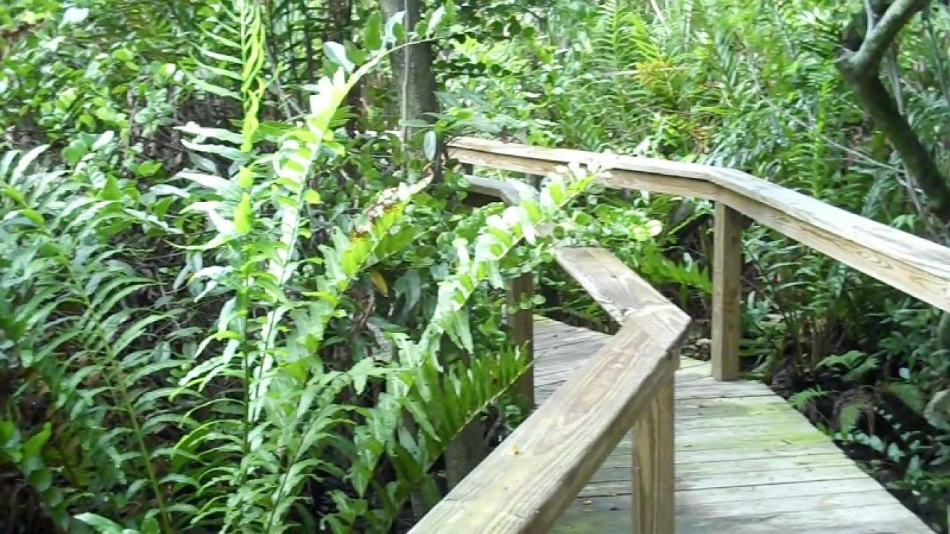 Leatherback Ferns in Fern Gully – Bahamas Ministry of Tourism