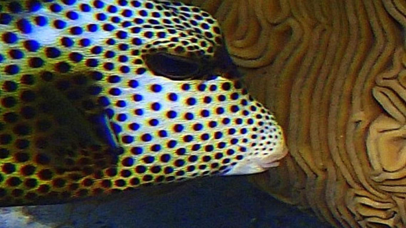 Trunk Fish - shallow dive – Capt Daryl Millers, Dive Master
