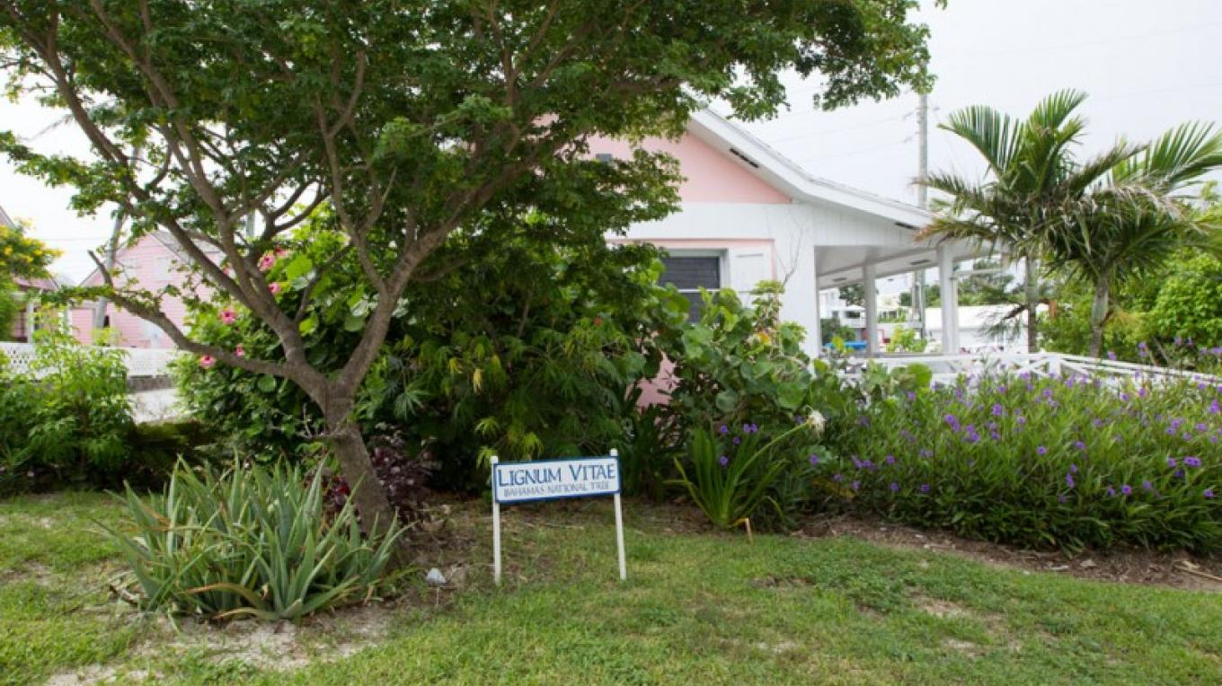 House with lignum vitae tree – Bahamas Ministry of Tourism