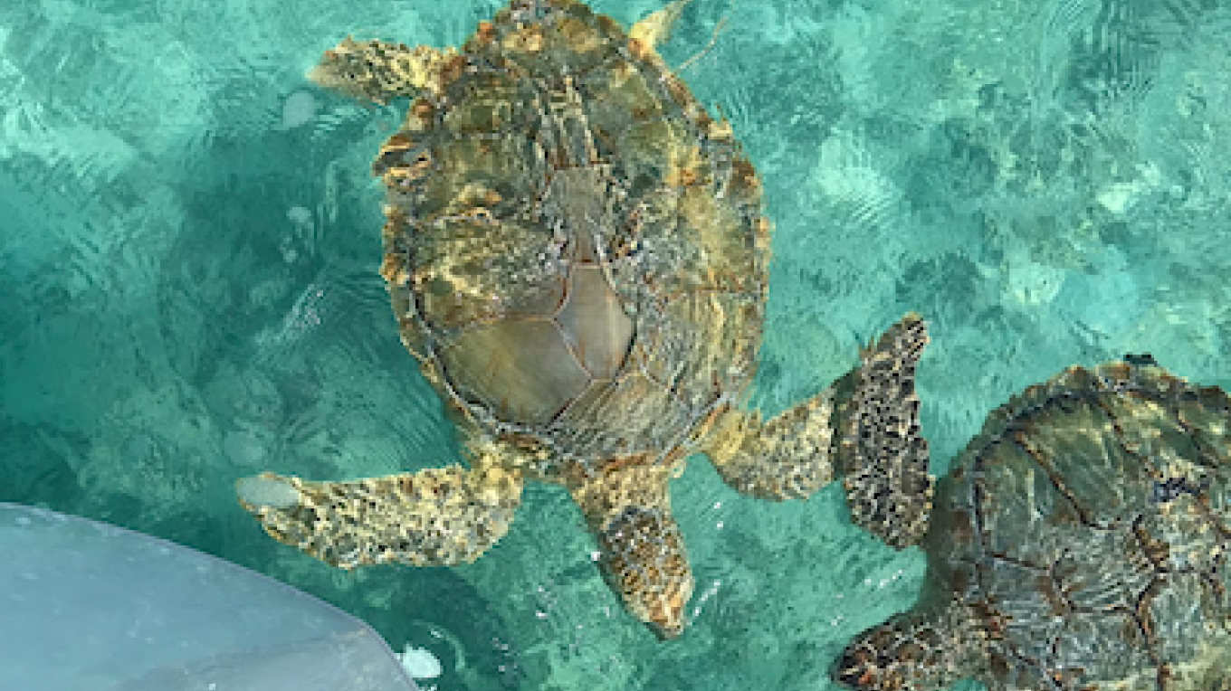 What's a trip out on the waters without turtle sightings!!! – Captain Marvin Cartwright