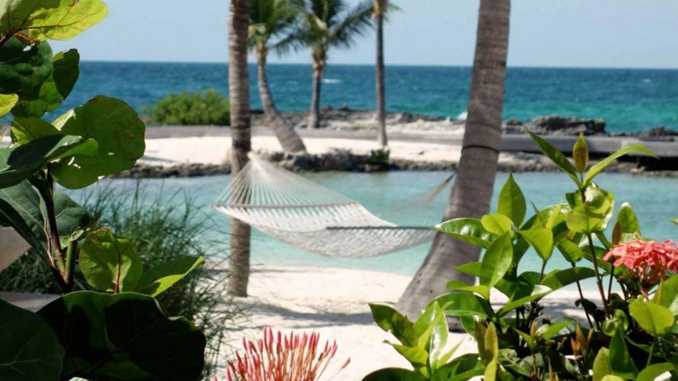 Hammock under the coconut trees – Cuvee