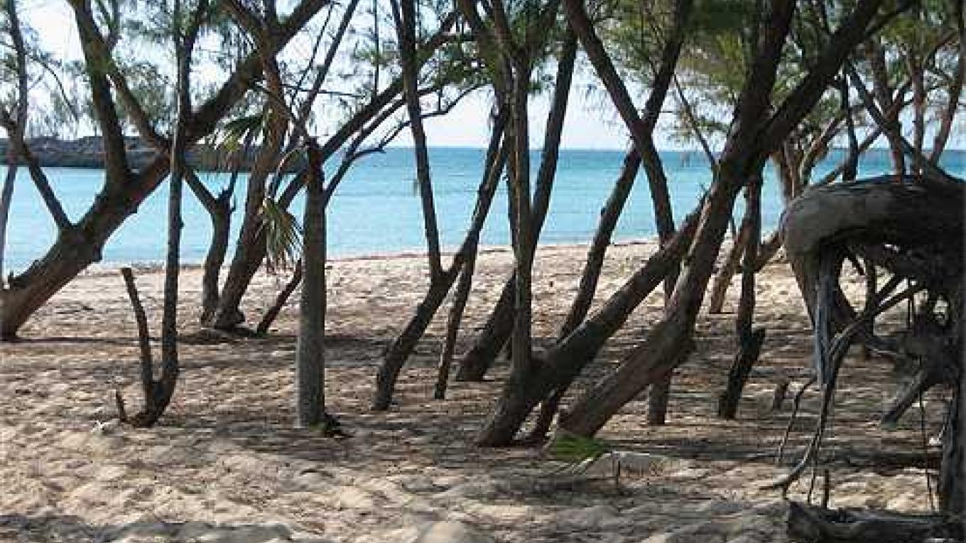 Picnic area at Gaulding Cay Beach – discovereleutherabahamas