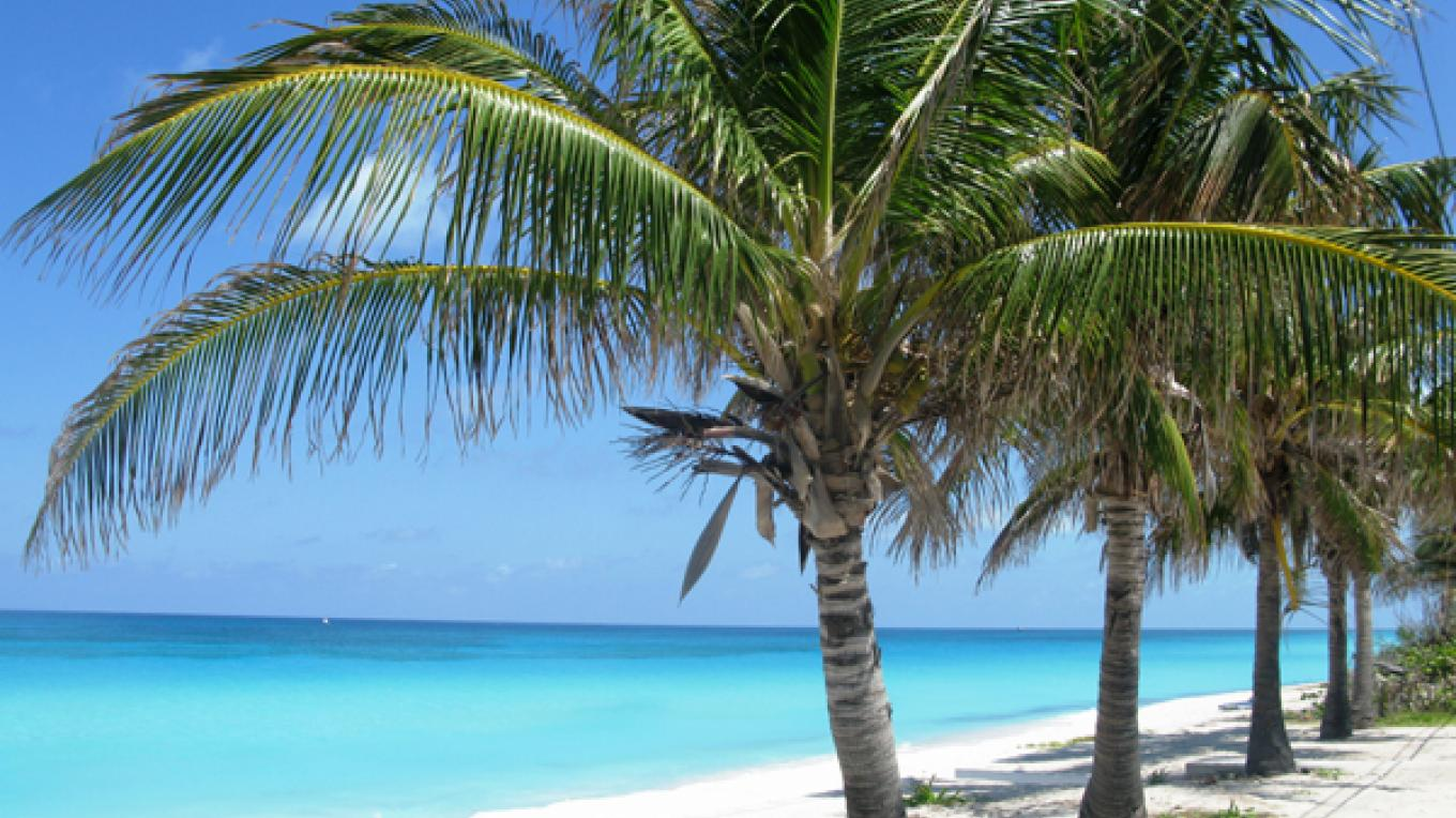 Alice Town Beach with palm trees – Bimini Tourist Office