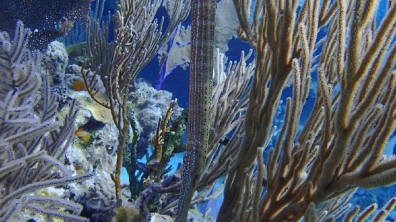 Under water sea plant – Miller's Dive Shop
