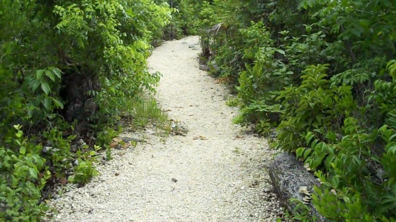 Fern Gully Walking Trail – Bahamas Ministry of Tourism