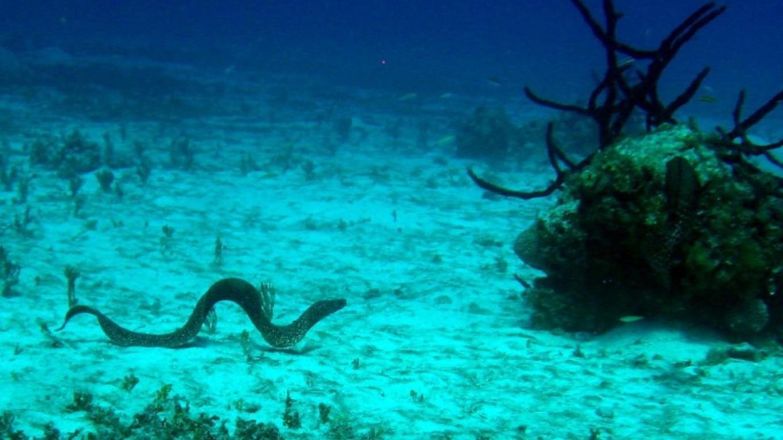 Eel – Miller's Dive Shop