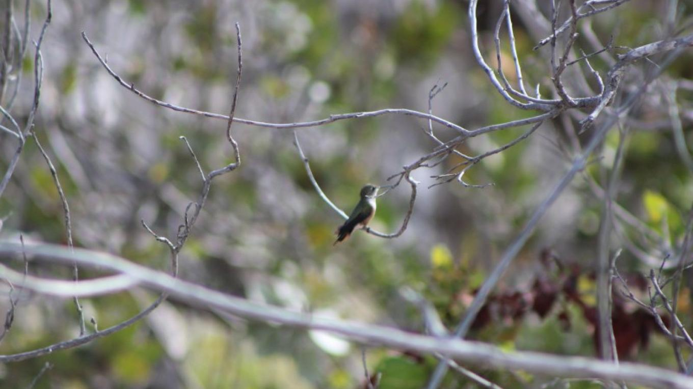 Bird in a tree at Duncan Pond – Patricka Ferguson, Yahaka Island Tours