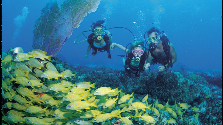 Guess enjoying Bimini Under Sea Excursion – Bimini Under Sea