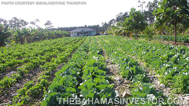 Photo of Farm. – The Bahamas Investor
