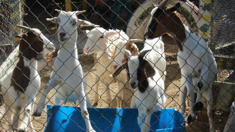 Pineville Motel Petting Zoo – Pineville Motel
