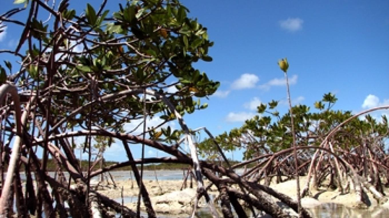 Picture of Westside. – Andros Nature Conservancy and Trust