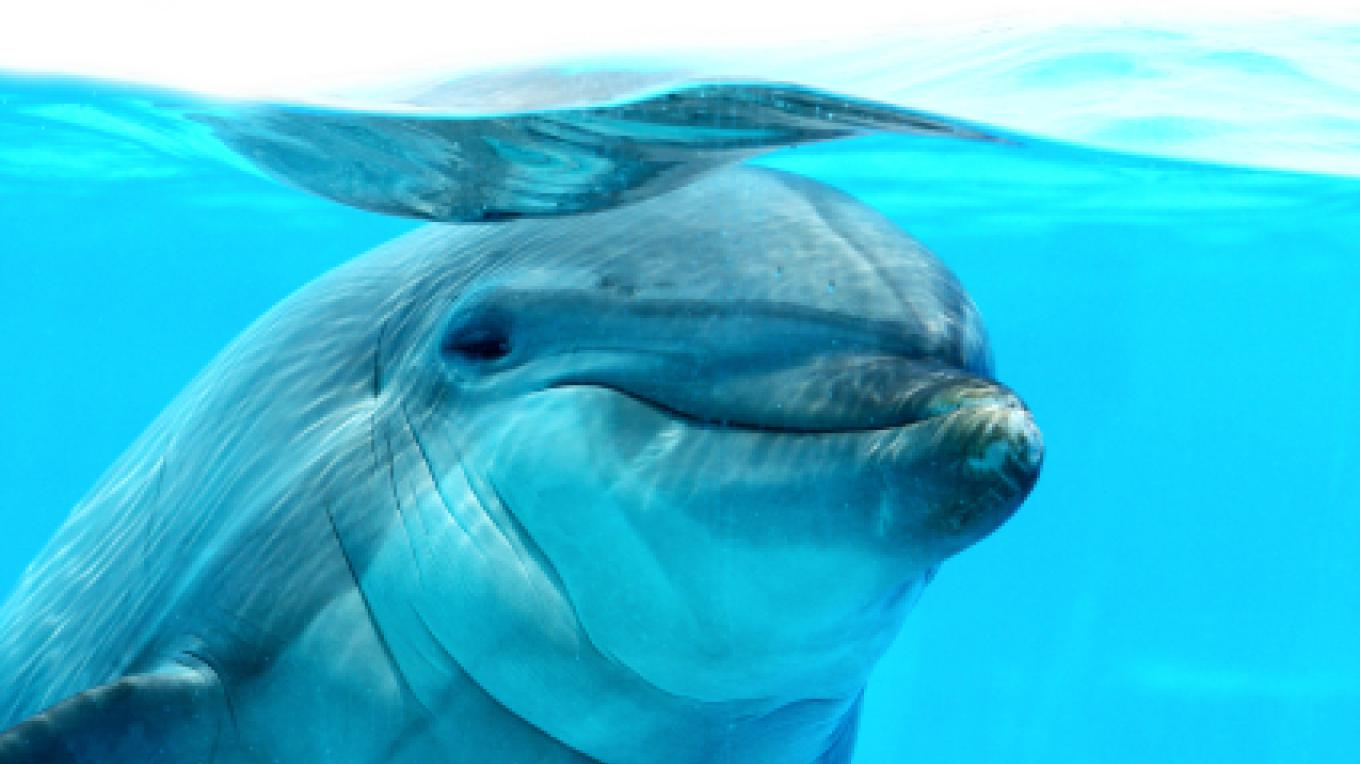 Dolphin – Dolphin Wild Quest