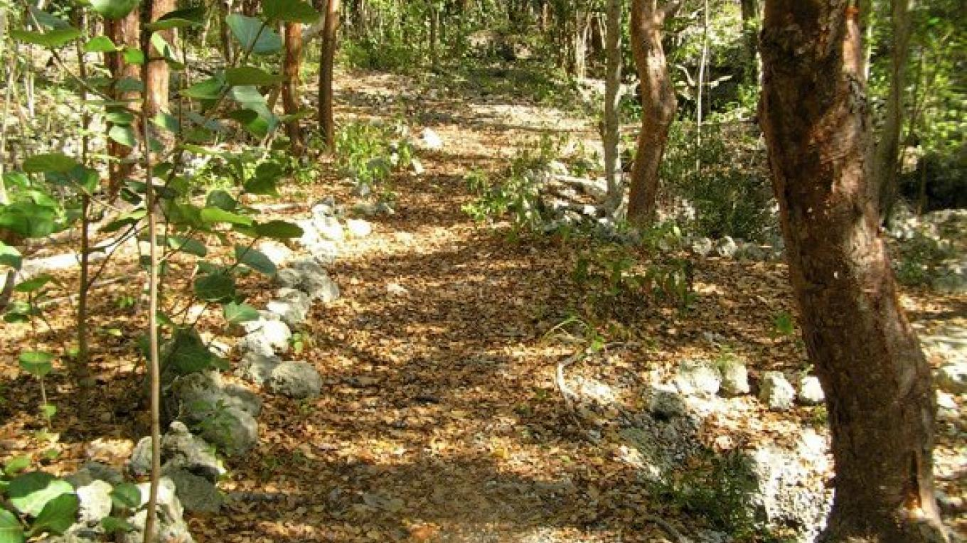 Tree-lined path leading to the cave. – Bahamas Ministry of Tourism