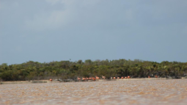 Flamingos at Duncan Pond – Patricka Ferguson, Yahaka Island Tours