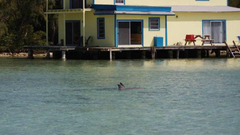 our dolphin guests – Gabrielle Douglas