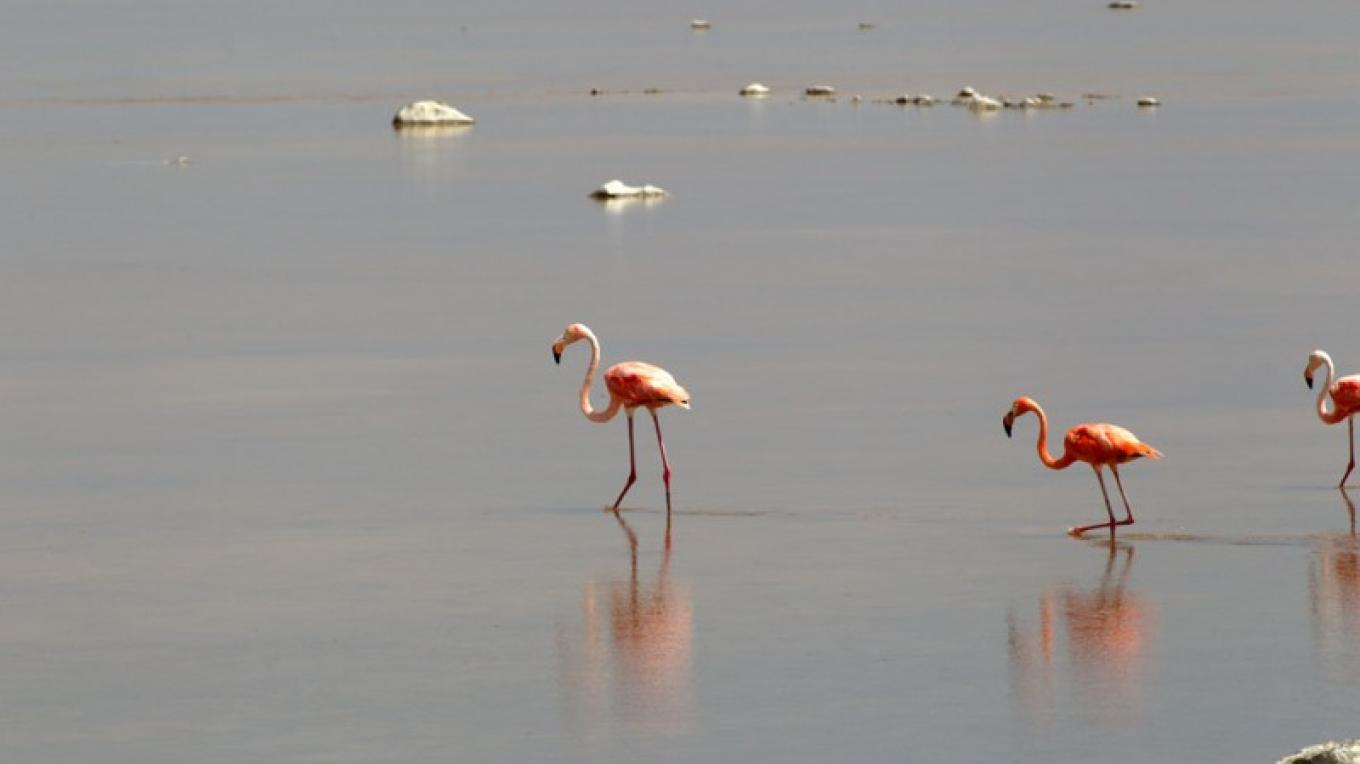 Flamingo in the Inagua National Park. – Bahamas Ministry of Tourism