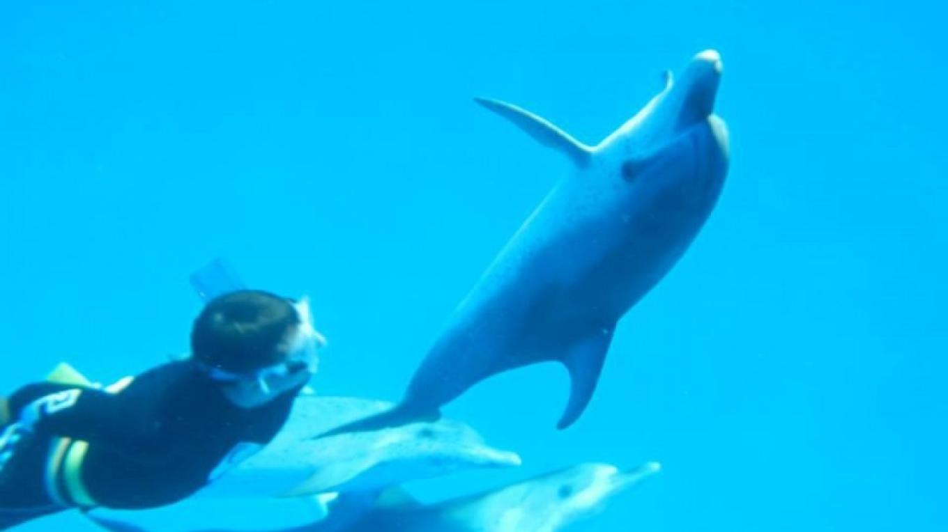Swimming with the dolphins – Bimini Under Sea