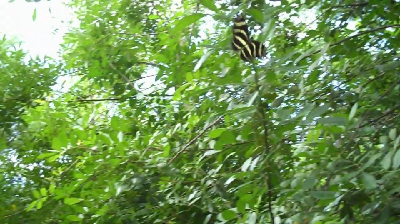 Butterfly in the Trees at Fern Gully – Bahamas Ministry of Tourism