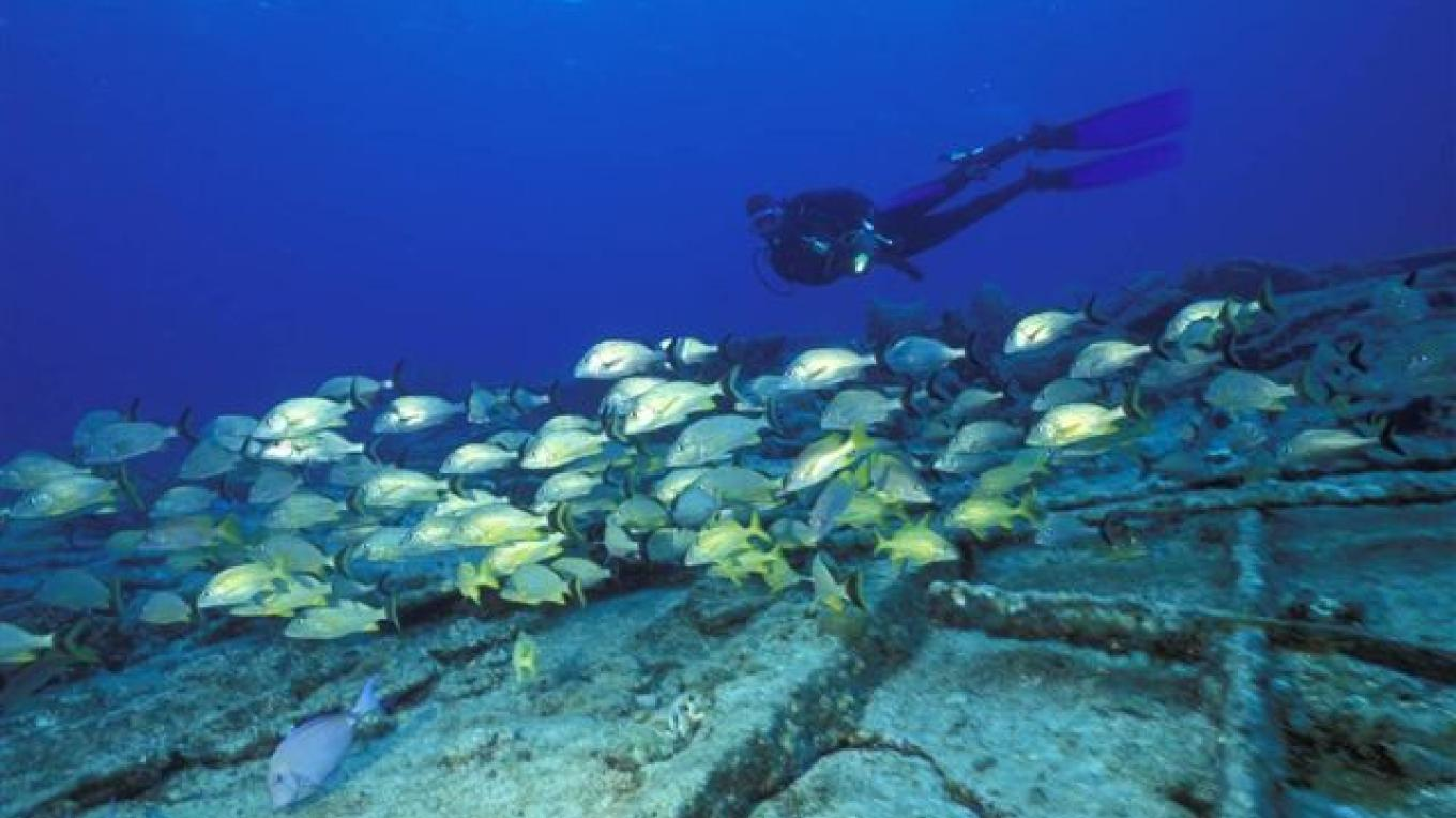 A diver observing the fishes. – Brendal's Dive Center