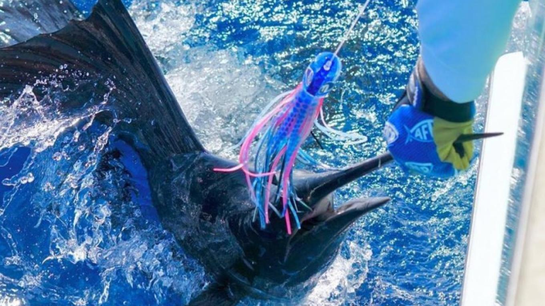 Sail Fish Landed – Chub Cay Club