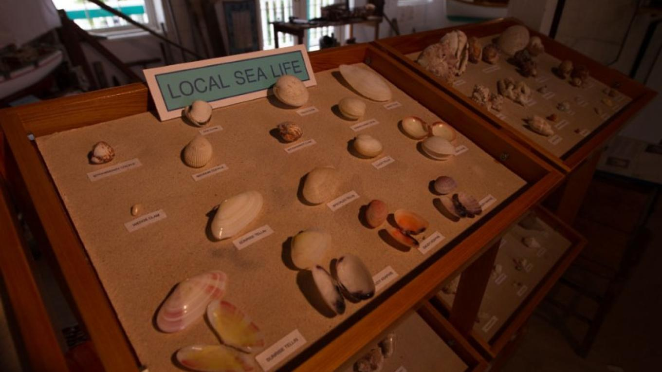 Shell display inside the Wyannie Malone Historical Museum – Bahamas Ministry of Tourism