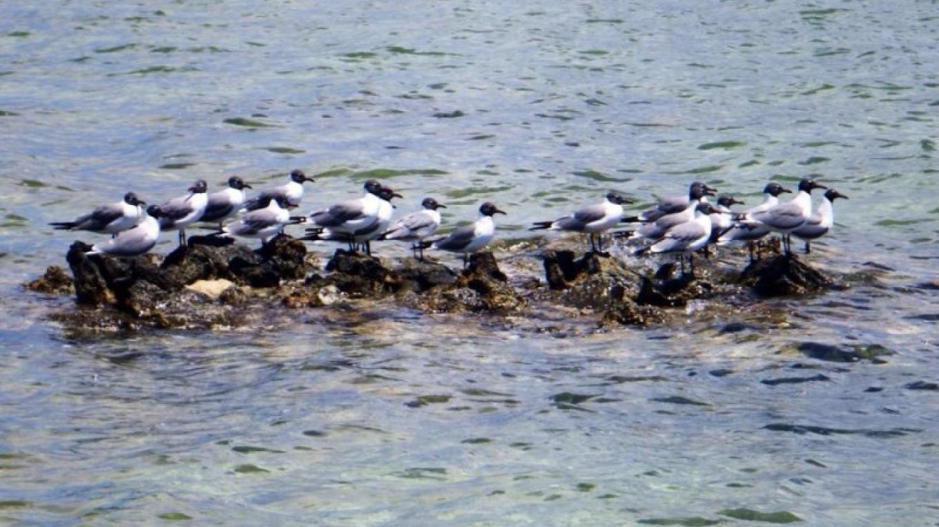 The seagulls also know a good place to eat when they are hungry!! – Mr. Kenneth Cartwright