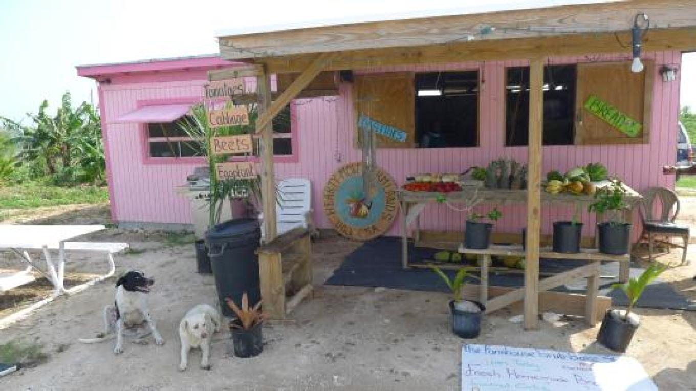 Fresh produce stand – tripadvisor