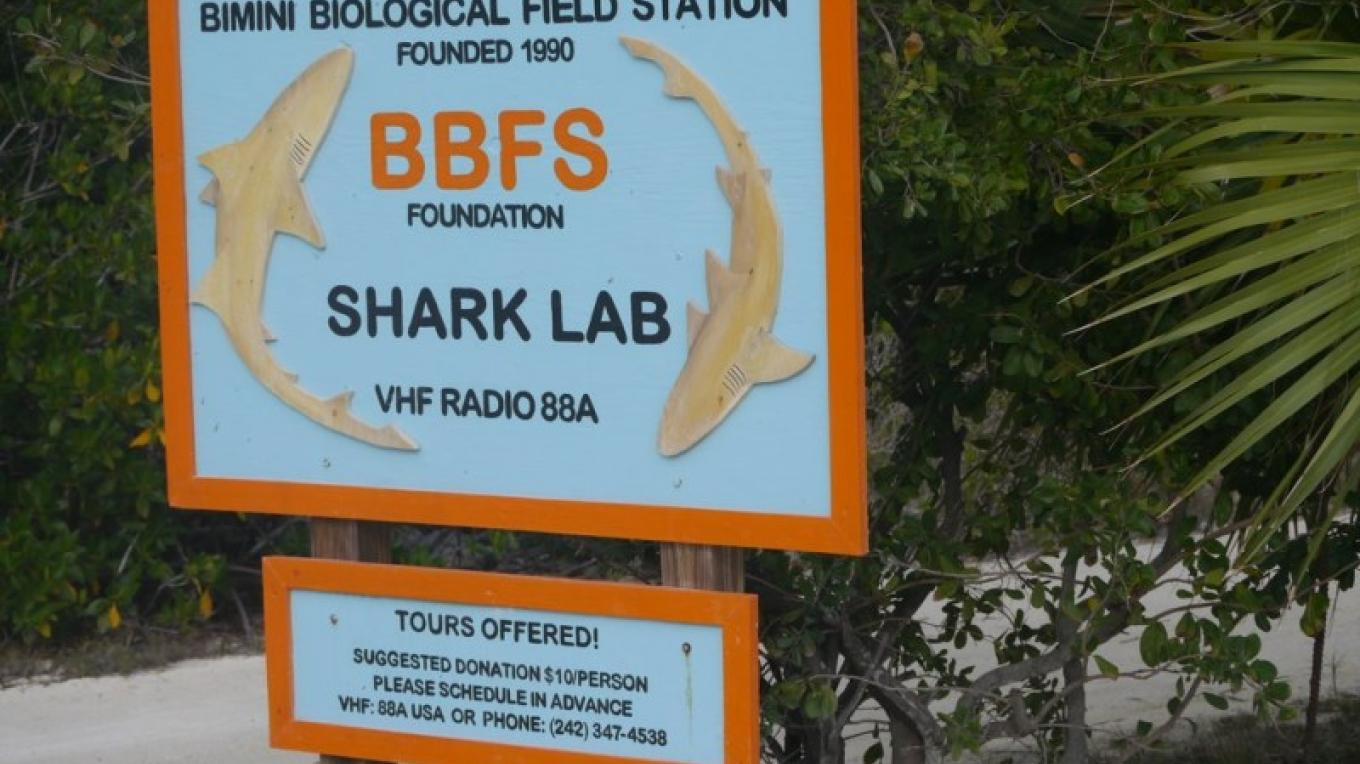 Shark Lab Bimini Sign – BBFS (Shark Lab)