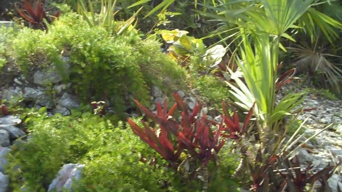The Garden at Harbour Inn Guest House – Bahamas Ministry of Tourism