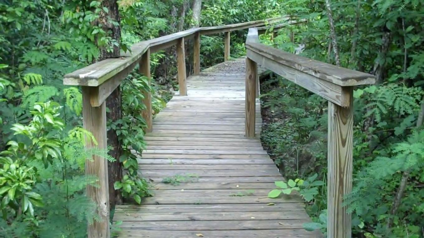 Elevated Trail in Fern Gully – Bahamas Ministry of Tourism