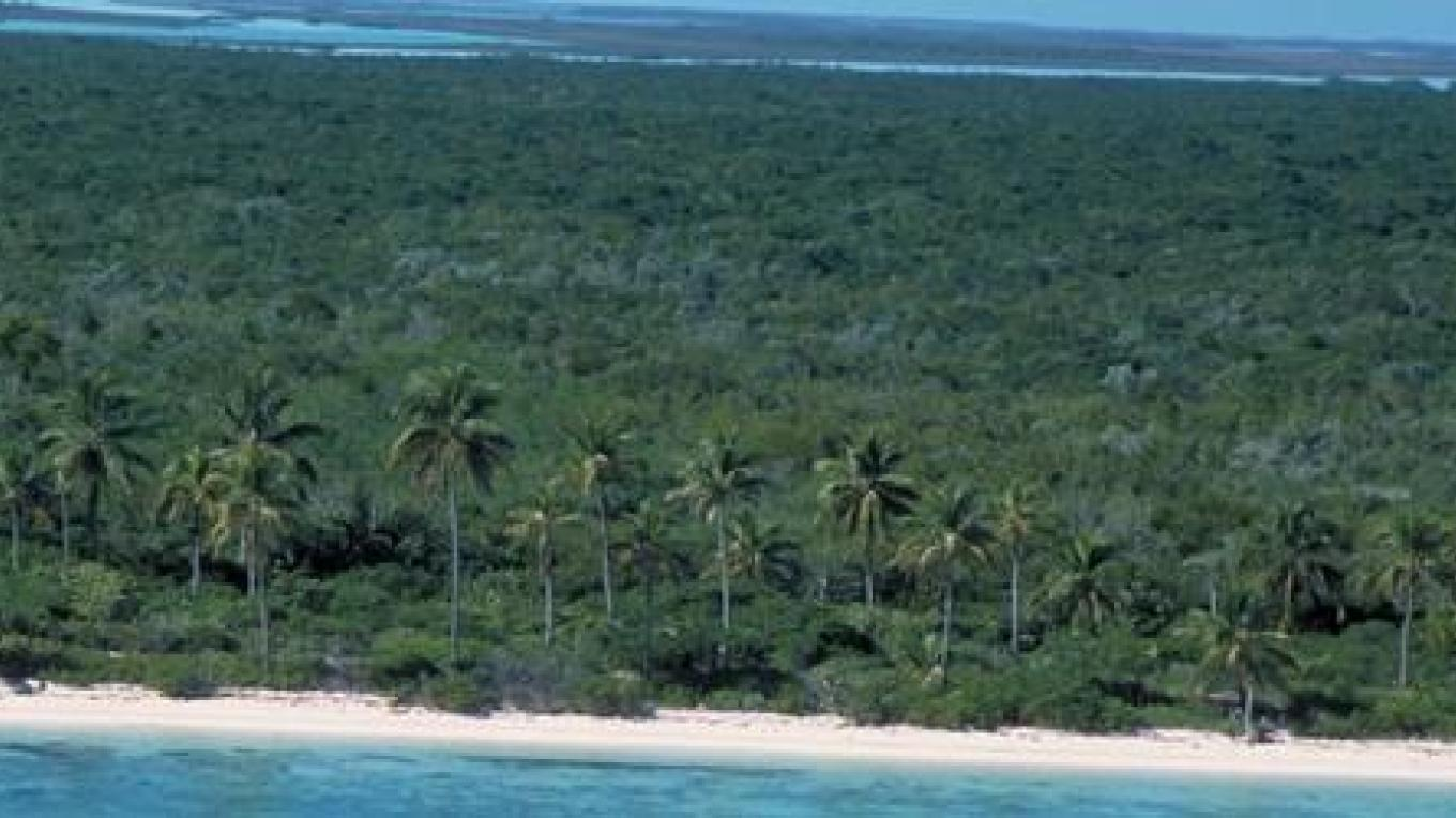 Sky view of forest. – Bahamas Ministry of Tourism/ The Nature Conservancy