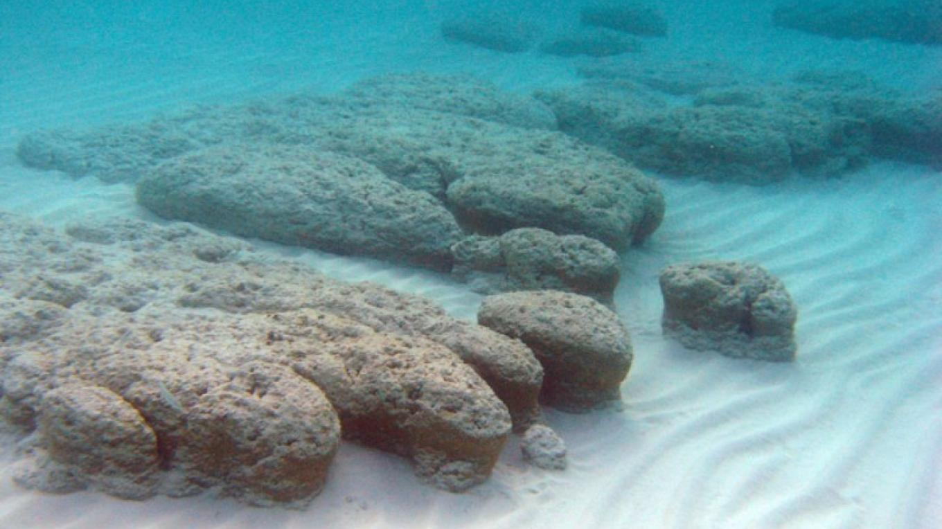 Stromatolites at Little Darby Island in The Exumas – R Pamela Reid, PhD.-Professor, Marine Geology and Geophysics