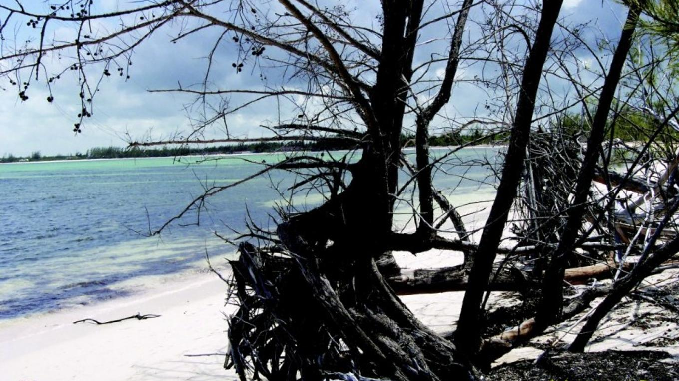 A fallen tree at Winding Bay Beach – elusive beaches of eleuthera