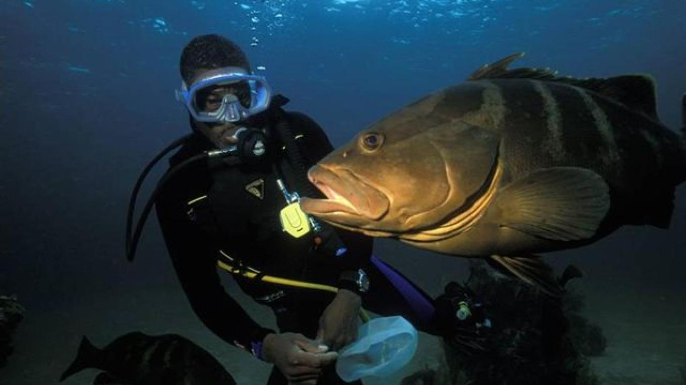 A fish passes by a diver without fear. – Brendal's Dive Center