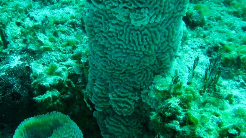 Nice sponges – Capt Daryl Miller, Dive Master