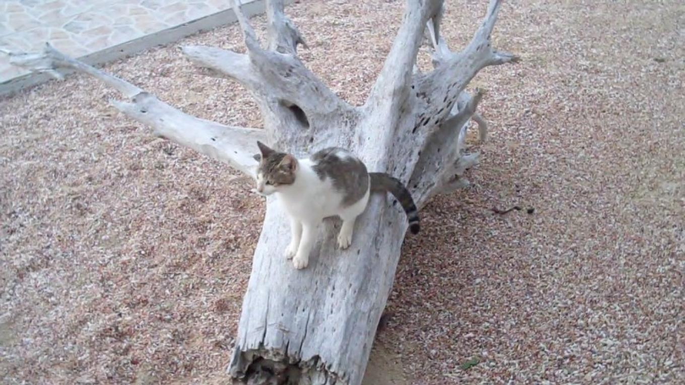 Kitten on the Grounds at Ivel's – Bahamas Ministry of Tourism