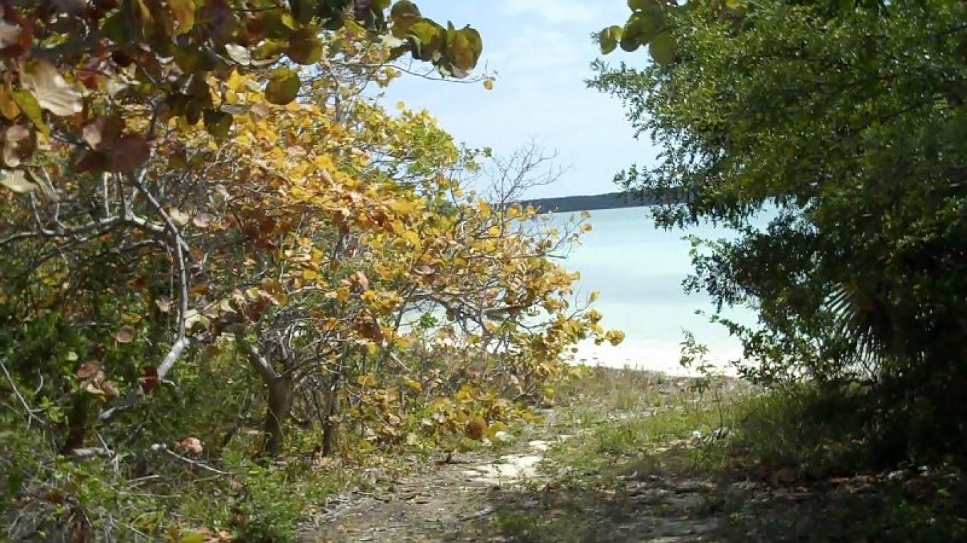 Walking path to The Ship Yard Beach – Bahamas Ministry of Tourism