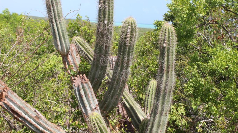 Cactus – Patricka Ferguson, Yahaka Island Tours